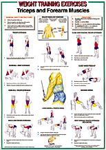 Triceps / Forearm Muscles Chart
