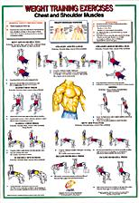 Chest / Shoulder Muscles Chart